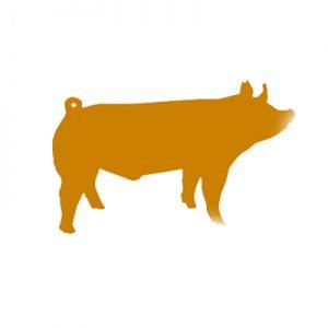 Beginner-Swine